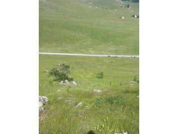 Poljoprivredno zemljište, Prodaja, Šavnik, Gornja Bukovica