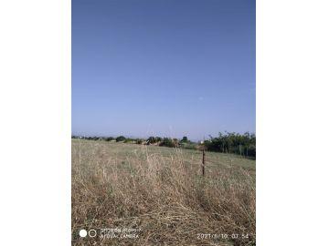 Agricultural plot, Sale, Podgorica, Tuzi